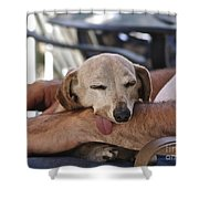 Dog Tired Shower Curtain