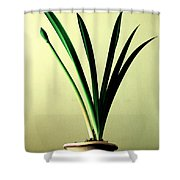Fanned Leaves Of An Amaryllis Shower Curtain