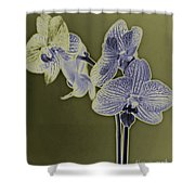 New Photographic Art Print For Sale Orchids 10 Shower Curtain
