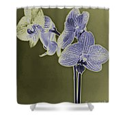 New Photographic Art Print For Sale Orchids 9 Shower Curtain