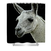 New Photographic Art Print For Sale   Portrait Of  Llama Against Black Shower Curtain