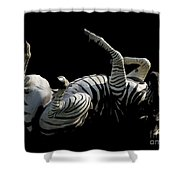 Frolicking Zebra On Black Shower Curtain