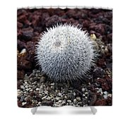 New Photographic Art Print For Sale White Ball Cactus Shower Curtain