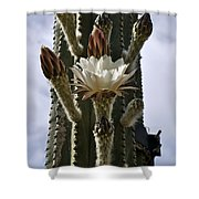 New Photographic Art Print For Sale White Cactus Flower Shower Curtain