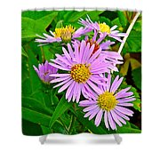 New York Asters In Flower's Cove-newfoundland Shower Curtain