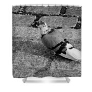 New York City Pigeon In Black And White Shower Curtain