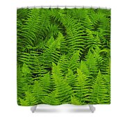 New York Ferns Shower Curtain