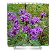 New York Ironweed Wildflower - Vernonia Noveboracensis Shower Curtain