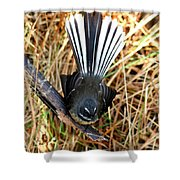 New Zealand Fantail Shower Curtain