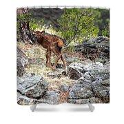 Newborn Elk Calf Shower Curtain