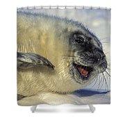 Newborn Gray Seal Pup Halichoerus Shower Curtain
