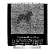 Newfoundland Dog Vintage Sketch Shower Curtain
