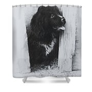 Newfoundland Puppy Shower Curtain