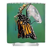 Newly-emerged Monarch Butterfly Shower Curtain