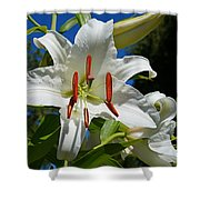 Newly Opened Lily Shower Curtain