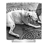 Newsworthy Dog In French Quarter Black And White Shower Curtain