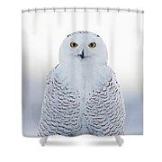 Nh Seacoast Snowy Owl  Shower Curtain