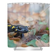 Nice Fire Salamander Shower Curtain