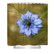 Nigella Damascena Shower Curtain