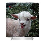 Nigerian Baby Goat 3 Of 8 Shower Curtain