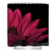 Night Blooming Lily 1 Of 2 Shower Curtain