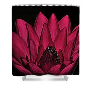 Night Blooming Lily 2 Of 2 Shower Curtain