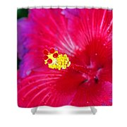 Night Fire Hibiscus Shower Curtain