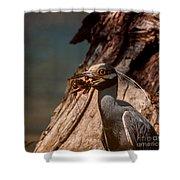 Night Heron And Crawdaddy Shower Curtain