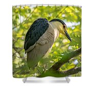 Night Heron At Rest Shower Curtain