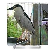 Night Heron Shower Curtain