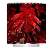 Night Of Glistening Red Salvia Shower Curtain