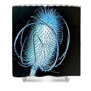 Night Teazle Shower Curtain