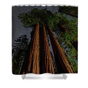 Night View Of Giant Sequoia Trees Shower Curtain