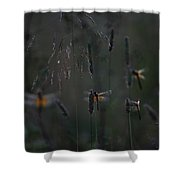Night's Lodging Shower Curtain