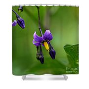 Nightshade Shower Curtain
