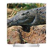 Nile Crocodile Shower Curtain