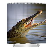 Nile Crocodile Swollowing Fish Shower Curtain