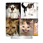 Nine Lives And Mood Swings Shower Curtain
