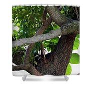 Nispero Tree Shower Curtain