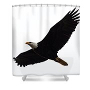 Nisqually Eagle Shower Curtain