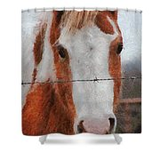 No Fences Shower Curtain