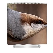 No Hands - Fayetteville - Nuthatch Shower Curtain