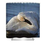 Swan Tuck Shower Curtain