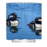 Male Hooded Merganser Pair Shower Curtain