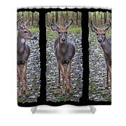 Curious Yearling Deer Shower Curtain
