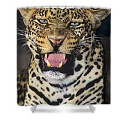 No Solicitors African Leopard Endangered Species Wildlife Rescue Shower Curtain