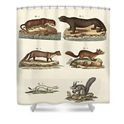 Noble Furs Shower Curtain