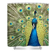 Noble Peacock Shower Curtain
