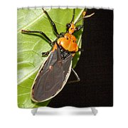 Nocturnal Bug Shower Curtain