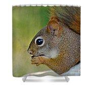 Nom Nom Squirrel  Shower Curtain